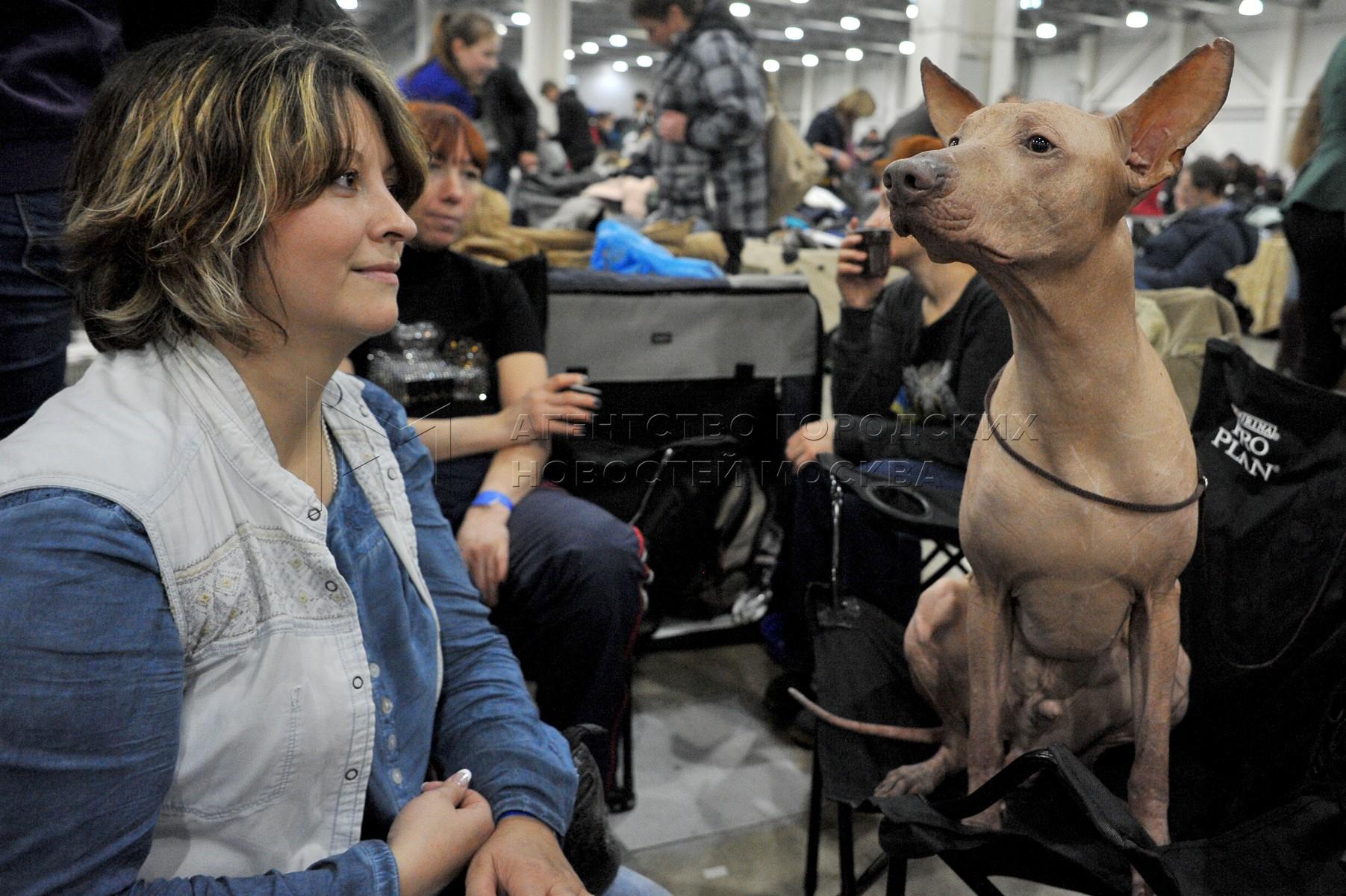 Шоу собак-чемпионов «Золотой ошейник-2017» в МВЦ «Крокус Экспо»