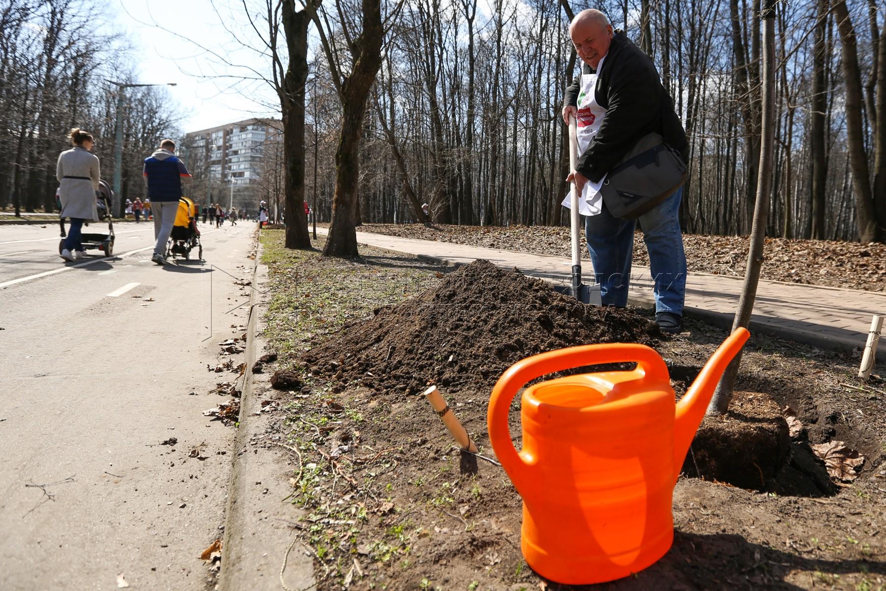 Высадка лип в рамках программы «Аллея долголетия» в парке «Сокольники»