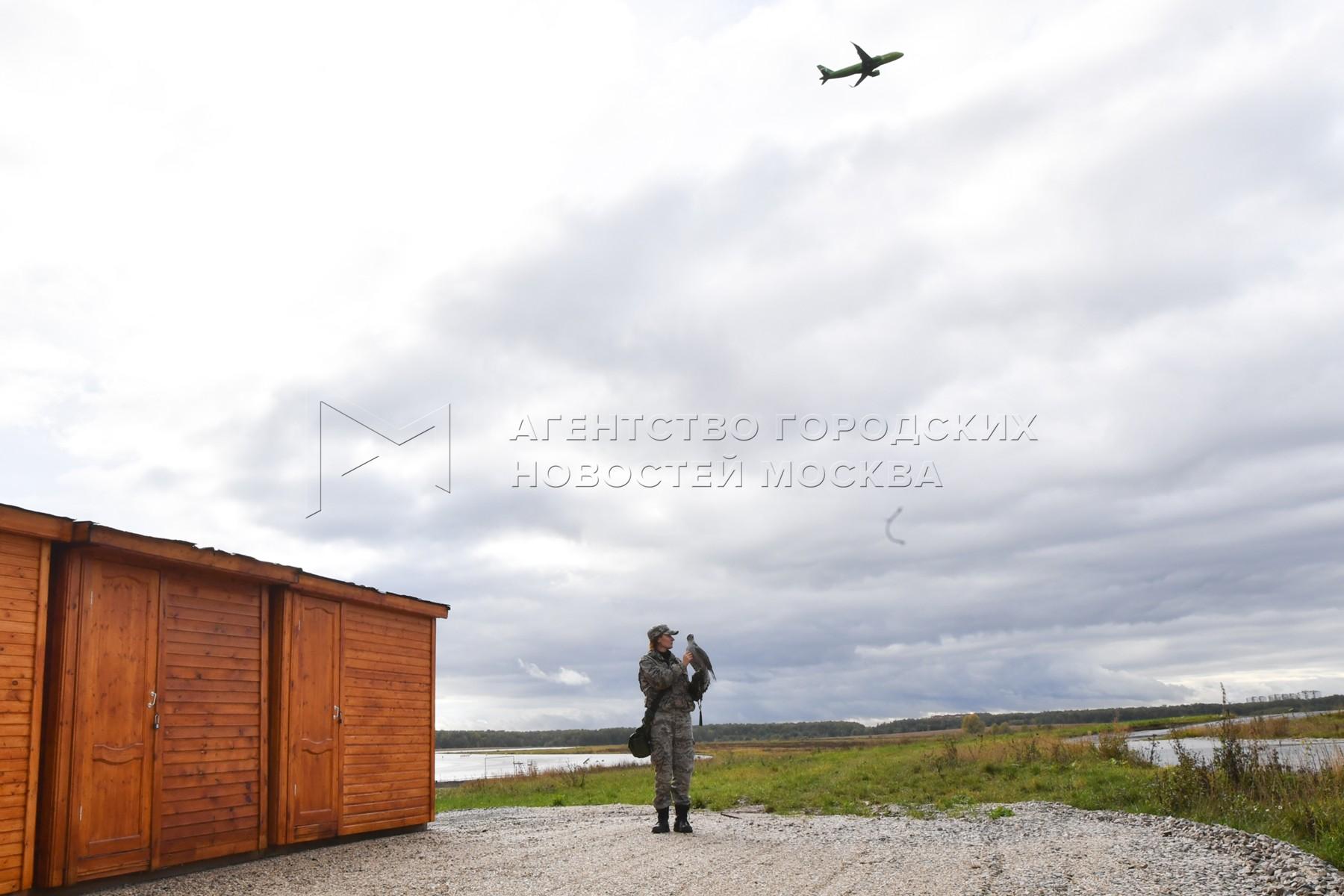 Орнитологическая служба аэропорта «Домодедово».
