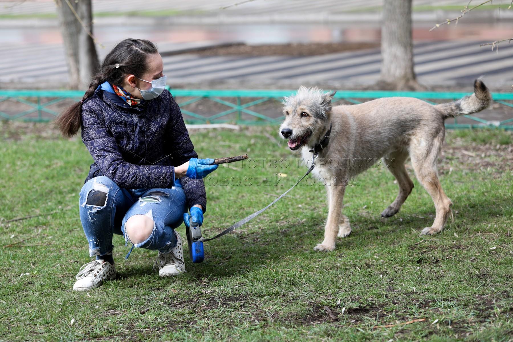 Выгул собак добровольцами проекта «Социальный волонтер» центра «Моя карьера» для москвичей, находящихся на самоизоляции.